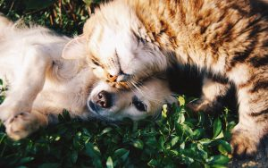 arthrovet-cat-dog